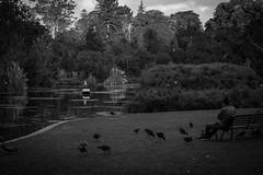 Boat (tommy kuo) Tags: blackandwhite bw nature birds boat blackwhite samsung melbourne royalbotanicgardens nx500