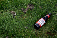 Wassup? (Ray Crabb) Tags: grass bottle litter poo budweiser windermere thelakes bowness wassup sheeppoo 2014 thelakedistrict brantfell