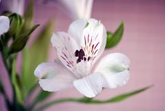Feeling of peace (Pensive glance) Tags: plant flower nature fleur plante ngc