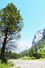 Kings Canyon, CA, USA by Hazo (Hazoster) Tags: park king canyon national np sequoia kingcanyon