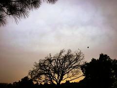 Silhouette (sehrish_pesnani) Tags: trees pakistan sunset nature birds silhouette
