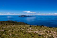 Titicaca birds (pzartmann) Tags: blue titicaca birds see bolivia llachon
