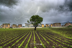 Thunderstorm and tree (Francesco Grisolia) Tags: life street city travel sky urban italy panorama tree green nature beautiful rain clouds lens landscape grey lights photo nikon europe flickr italia nuvole campania foto wildlife natura highdefinition april thunderstorm lightning aprile albero pioggia paesaggio citt temporale lampo autofocus campi 25aprile 2470mm highquality lampi fulmine nikonclub nikonusa d7100 nikonitalia nikoneurope iamnikon cloudsstormssunsetssunrises nikonclubit nikond7100 thunderstormandtree