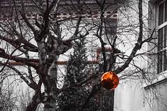 Wintertime ;) (pawel.molisak.86) Tags: christmas red plant tree rot outdoor bauble choinka nikond3200 drzewo czerwony bombka ozdoba pawelmolisak