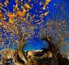Panorama 4 (gatsishot) Tags: panorama nature nikon sigma greece 1020 orma d5100 gatsishot