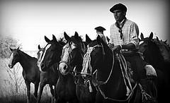 Retrato antiguo (Eduardo Amorim) Tags: horses horse southamerica argentina criollo caballo cheval caballos cavalos pferde herd cavalli cavallo cavalo gauchos pferd ayacucho chevaux gaucho cavall  amricadosul gacho amriquedusud provinciadebuenosaires  gachos  sudamrica suramrica amricadelsur sdamerika crioulo caballoscriollos criollos  tropillas buenosairesprovince americadelsud tropilhas tropilla crioulos cavalocrioulo americameridionale tropilha caballocriollo eduardoamorim cavaloscrioulos