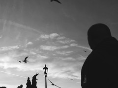 Time will turn us into statues (dianamegyes) Tags: christmas bridge bw white black bird silhouette statue contrast prague seagull charles praha most karlv
