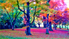 Fantasy Season (farmspeedracer) Tags: park pink red color tree green landscape scenery