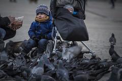 pigeons (juiceSoup) Tags: krakow