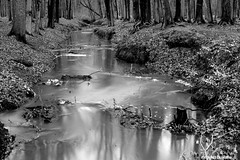 Feeding the trees (Red Cathedral is alive) Tags: wood longexposure blackandwhite tree water creek forest river outdoors noiretblanc zwartwit sony pollution alpha foret bois mudrun brasschaat woud peerdsbos sonyalpha mirrorless a6000