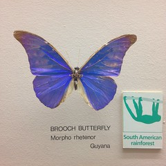 Brooch Butterfly (Inkysloth) Tags: blue museum display lepidoptera lettering horniman letraset
