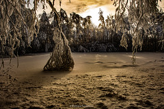 Silent WinterLand (Explored) Thank you all! (Fredrik Lindedal) Tags: trees winter sunset snow cold skyline pond nikon shadows sweden branches harmony serene sverige winterland d7200