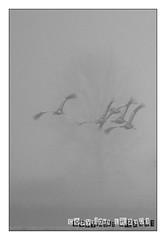 Signature (www.lr2301.fr) Tags: grues