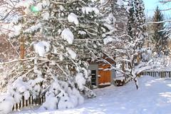 FEBRUARY 2016 SNOWSTORM 2-3-2016 7-06-54 AM (Ms.Wanderlust) Tags: winter love beauty minnesota snowstorm blizzard excelsior minnesnowta i minnesotafun