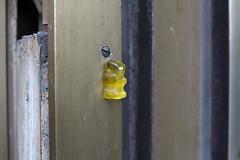 ein ses blondes Brchen bin ich gewesen, dann nagelte mich das aufgebrachte Volk an die Verandatre (raumoberbayern) Tags: bear door yellow munich mnchen gummibrchen gelb robbbilder trrahmen urbanfragments