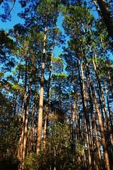 IMG_7386 (SweetMeow) Tags: forest shadows southcarolina boardwalk marsh conservancy hiltonheadplantation whoopingcranepondconservancy