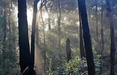 last of the morning mist (alden0249) Tags: mist nature sunrise landscape dawn australianlandscape bidjigalreserve