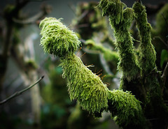 Mossy branches (judy dean) Tags: naturethroughthelens