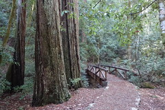 Big Tree Bridge (Redwood Reverence) Tags: california road wood bridge trees light green leaves forest wooden woods path trail arbor greens remote redwood redwoods wilderness arbour