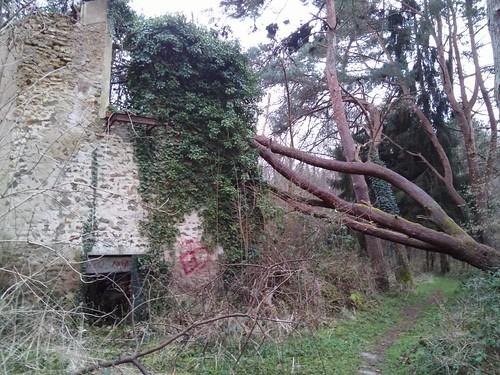 bois Livry-sur-Seine-003