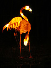 UK - London - Chiswick - Magical Lantern Festival - Flamingo (JulesFoto) Tags: uk england london flamingo chiswick chineselanterns chiswickpark chiswickhousegardens magicallanternfestival