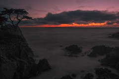 Lone Cypress | Pebble Beach (dostehboss) Tags: beach monterey pebble pacificocean carmel cypress 17mile