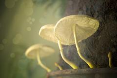 Fantasy (Jair R Alves) Tags: fantasy cogumelo