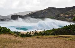 Sandy Beach Bombing 03/08/16 (Run amuck) Tags: surf oahu sandybeach surfphotography fishscalephoto