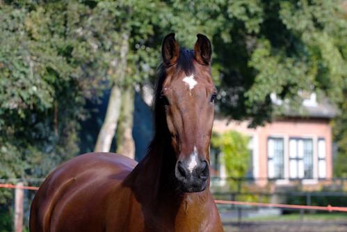 Horses Insight  (23)