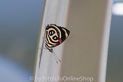 Argentinien_Insekten-83 (fotolulu2012) Tags: tierfoto