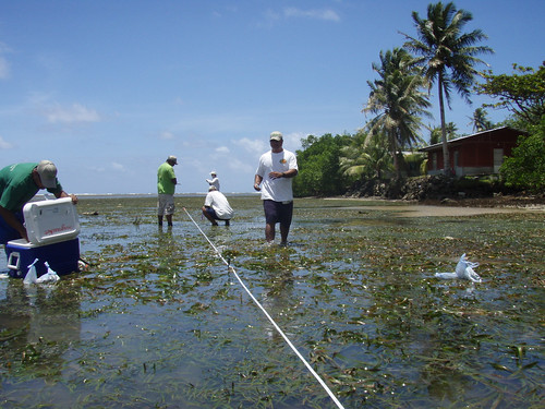 SeagrassNet monitoring