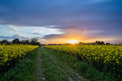 DSC_3273 (The Real Luke Skywalker) Tags: road flowers sunset italy sun motion field grass yellow clouds landscape nikon long exposure italia feld wolken tokina dirt bewegung flare landschaft lombardia untergang torrazza 1116mm d3100
