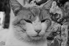 Gato (Tato Avila) Tags: cat colombia gato felinos cundinamarca