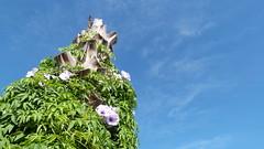 Blue sky (Angie Siles) Tags: morning travel flowers summer sky naturaleza flores flower verde green texture textura maana nature day purple flor paisaje dia viajes cielo verano violeta