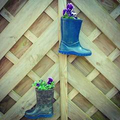 Welly Poots #gardenideas #fun #gardens #garden... (nathanrobinson2) Tags: family sun beautiful sunshine gardens garden fun outside boots gardening pots wellington wellingtonboots wellies gardenideas instagram uploaded:by=flickstagram instagram:photo=956593089615758004184137303