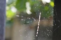 Cobweb (matziarielena) Tags: sun spider cobweb