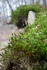 Spiraling Life. (Fotopraktic) Tags: life plants green nature colors beautiful stone contrast forest spiral moss woods nikon focus outdoor vibrant depthoffield fibonacci alive dslr spiraling d5300