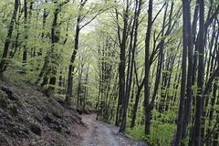 Enchanted Woods! (Michelina Salandra) Tags: verde italia natura montagna bosco boschi voods