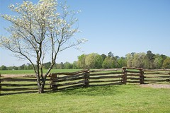 Split-rail Fence (Herculeus.) Tags: flowers trees usa fence landscape outside nc outdoor northcarolina civilwar battleground floweringtrees splitrailfence 5photosaday averasborobattlefield penultimatebattleinnc