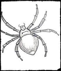 #spider #8legs (nurhidayah4) Tags: spider 8legs