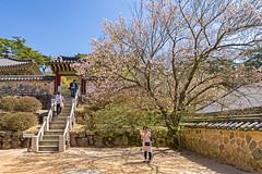 Corner of Monastery (johnlsl) Tags: monastery sakura southkorea