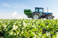 m_IMG_5359_MartenSvensson (Bad-Duck) Tags: mat raps vr ker amazone maskiner jordbruk grda lantbruk rstid fltarbete livsmedelsproduktion vxtnring konstgdsel oljevxt gdningsspridare hstraps