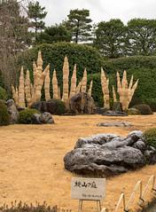 20160229-111439_5K_80 (pya) Tags: kyoto  camellia plumblossoms jonangu     weepingplumblossoms