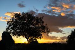 Puesta de sol en Los Barruecos (Luis GA) Tags: blue sunset espaa orange cloud tree azul landscape arbol atardecer spain nikon paisaje naranja ocaso nube extremadura holmoak encina luisga d3100 lugamor