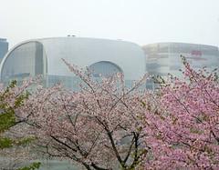 C16-Seoul-Parc Seokcho(15) (jbeaulieu) Tags: seoul coree parc seokcho