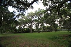 Canon206511 (godrudy6661) Tags: neworleans audubonpark treeoflife oaktrees