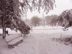 Winter in the park (cod_gabriel) Tags: winter snow romania bucharest bucuresti bukarest roumanie boekarest bucarest iarna zapada romnia bucureti zpad iarn bazilescu bucareste parculbazilescu parcbazilescu