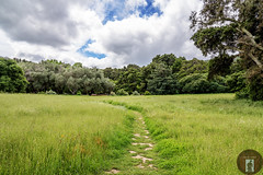 California-Central-Coast 2016-04-27 (randyandy101) Tags: trees panorama tree green clouds forest walking landscape outdoors photography outdoor hiking path meadow bluesky running m hills trail highway1 biking lowclouds greengrass californiacentralcoast picnicking greenfields