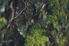 Feuille mousse nature Besanon (le rat et l'ours) Tags: extrieur mousse feuille besanon doubs avanne