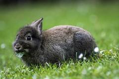 Tu manciare ???? (freguggin2010) Tags: nikon animale coniglio paolovillaggio